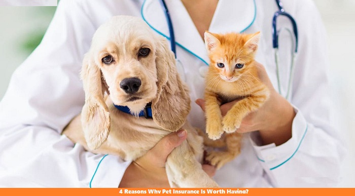 4 Reasons Why Pet Insurance Is Worth Having