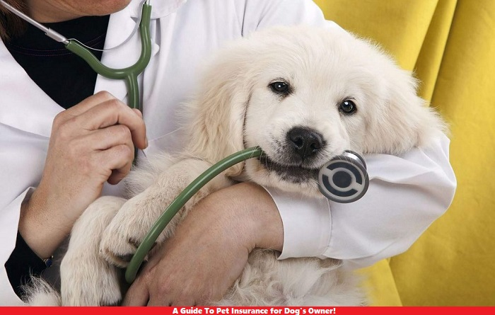 A Guide To Pet Insurance for Dog's Owner