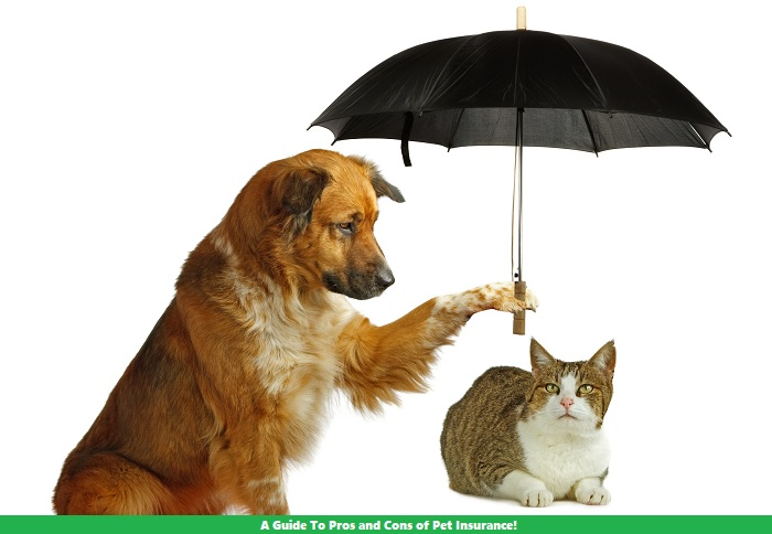 A Guide To Pros and Cons of Pet Insurance