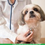 A Guide To What pet insurance covers And What Not
